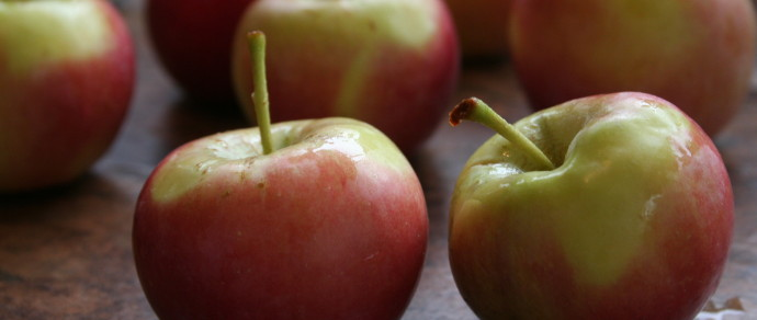 Tour of Region's Top Grower of Organic Apples Showcases Tiny, Sweet Crimson Gold