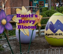 Knotts Berry Bloom