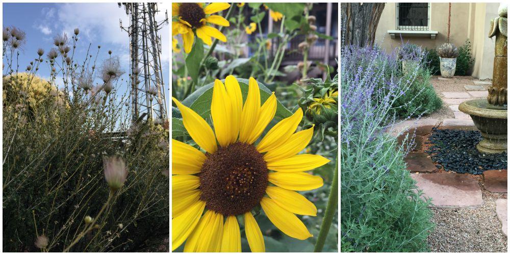 Santa Fe #SaborSW Secret Garden
